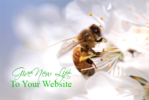 4 Lifesaving Tips to Spring Life Into Your Website